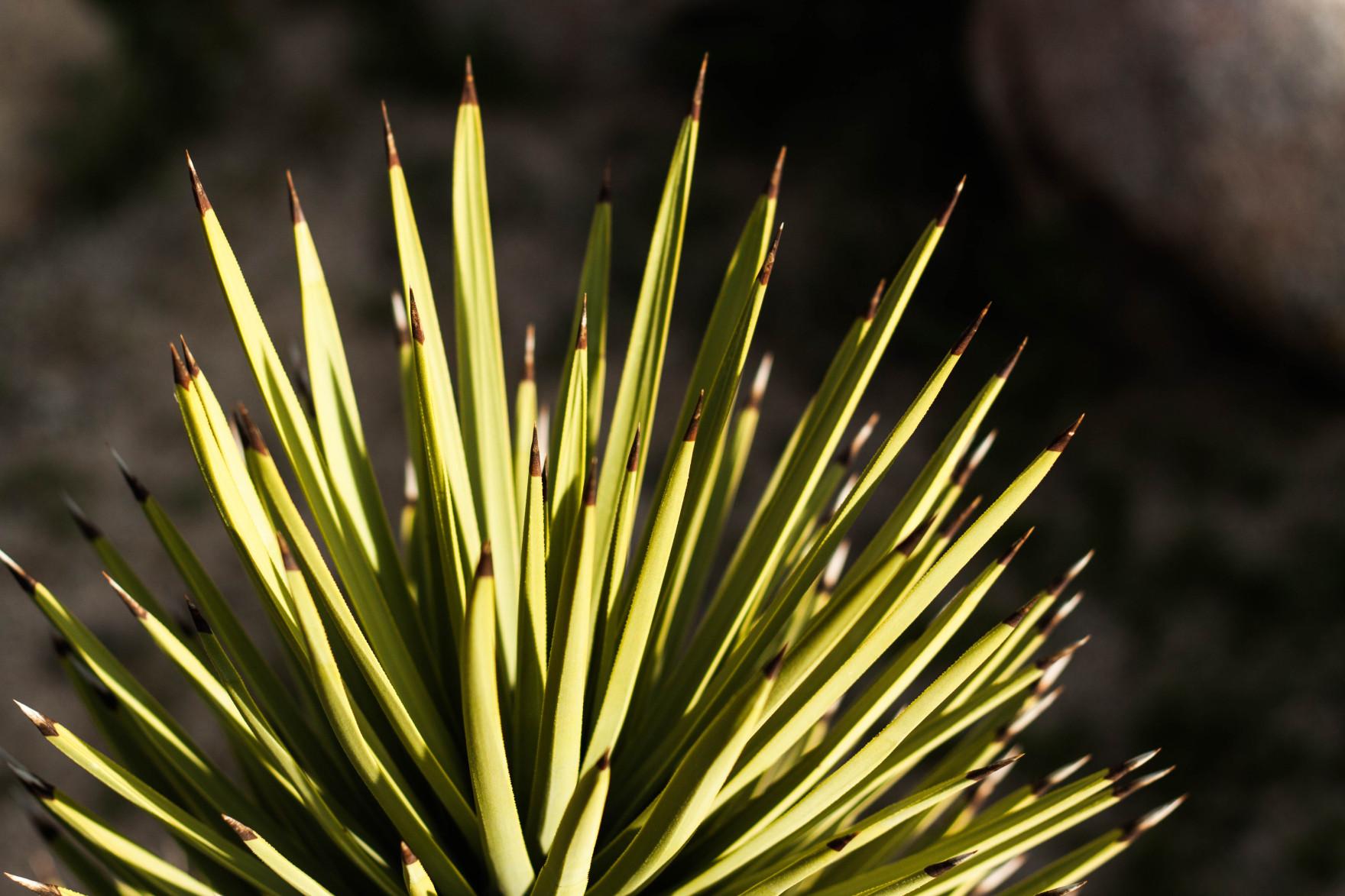 Bored Vegetarian Bethany Pickard Yucca Valley Joshua Tree Green Pokey Cactus-15