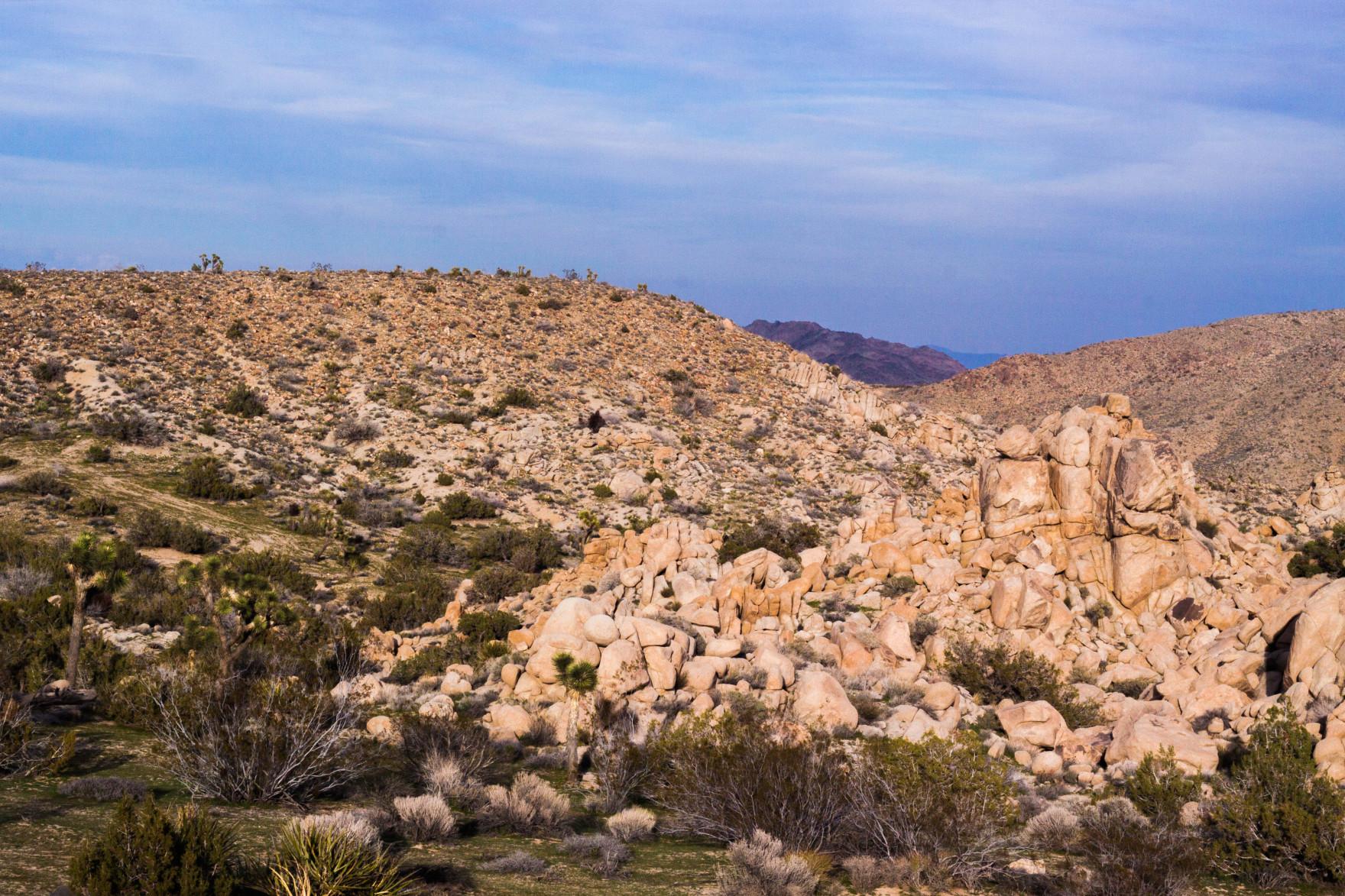 Bored Vegetarian Bethany Pickard Yucca Valley Joshua Tree Many Piles of Rocks-15