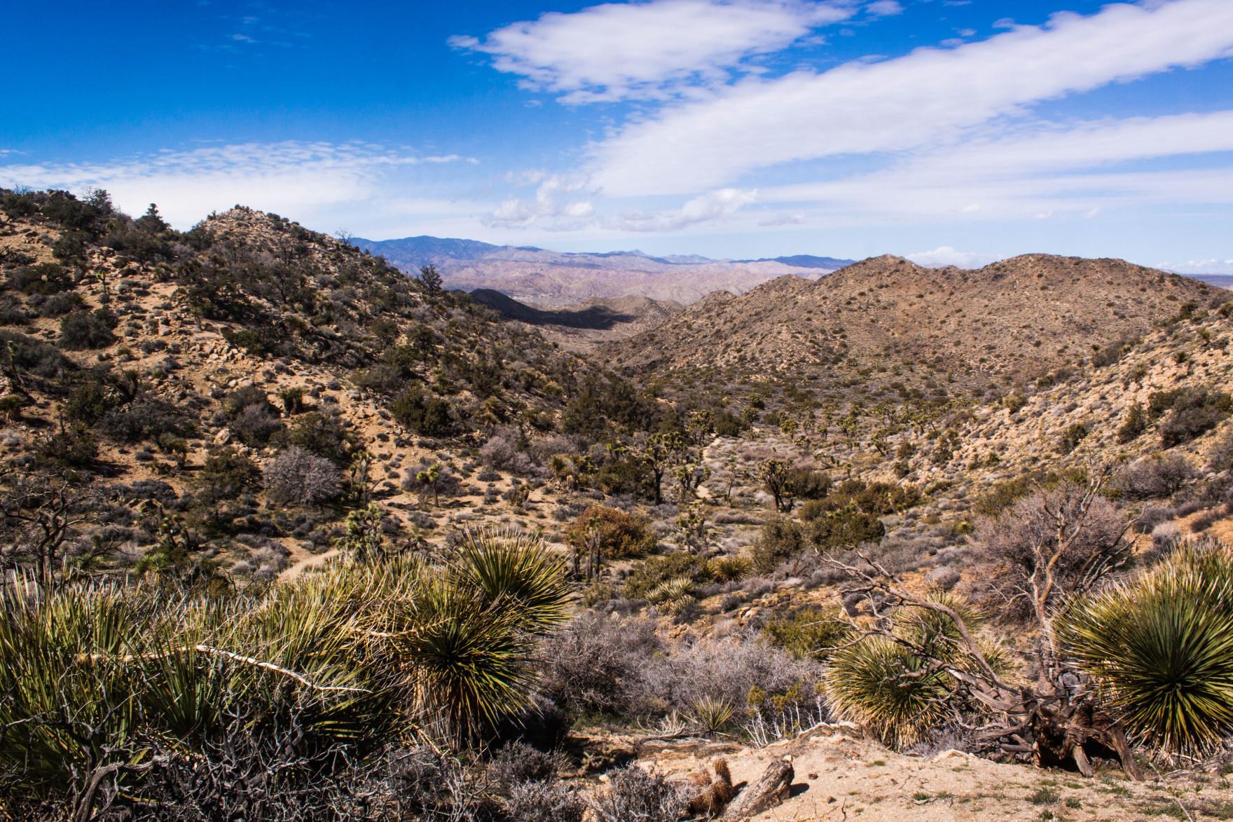 Bored Vegetarian Bethany Pickard Yucca Valley Joshua Tree View-15